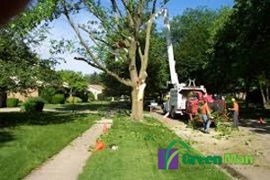 Tree care division grinding trees in a chipper