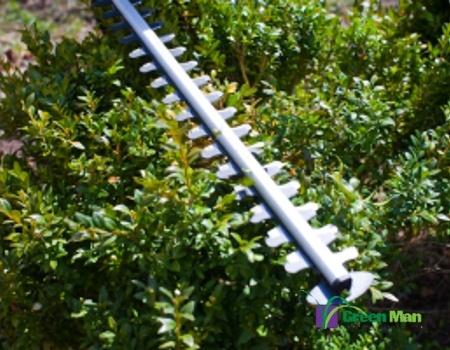 tree care pruner bush - Tree & Plant Care