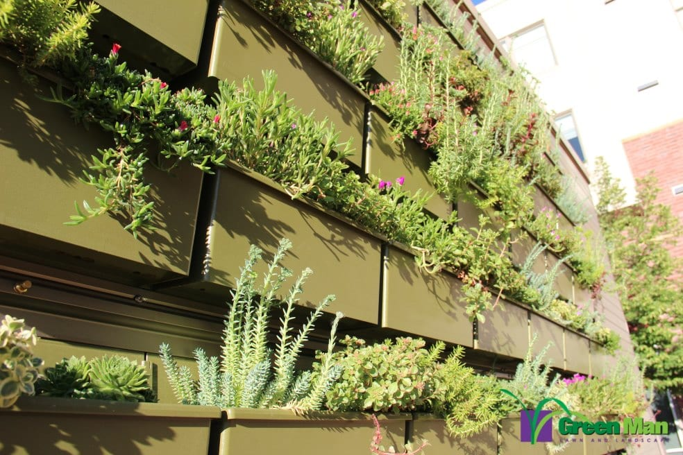 City-View-Green-Wall-Project-10